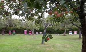 Just around the corner: a social-ecological system from which we could harvest some apples.